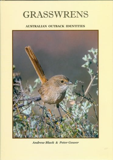 Grasswrens in their avian family the Maluridae